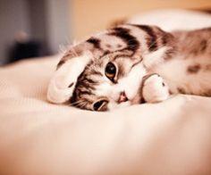 kitty kitty kitty <3