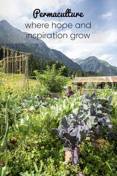The permaculture garden at meters in Kleinwalsertal Permaculture Garden, Up, Vineyard, Herbs, Mountains, Explore, Park, Travel, Outdoor