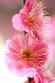 Lindíssima flor...