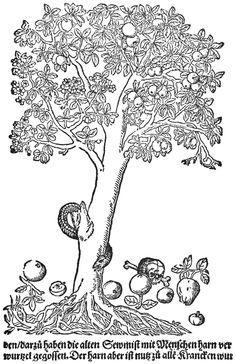 El árbol de la ciencia. La ciencia y su maldición. Interpretación bíblica