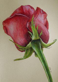 Use these crayons to sketch your imagination .- Verwenden Sie diese Buntstifte, um Ihre Phantasie zu skizzieren – # Use these crayons to sketch your imagination – # - Pencil Art Drawings, Realistic Drawings, Colorful Drawings, Art Drawings Sketches, Rose Drawings, Rose Drawing Pencil, Red Rose Drawing, Pencil Sketching, Sketch Art