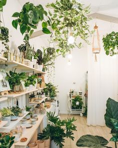 99 Great Ideas To Display Houseplants Plants Planters Indoor