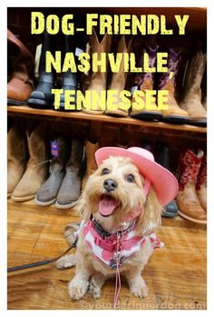 Dog-Friendly Nashville, Tennessee - Click here to find out some of the exciting things you can do with your dog in Music City! http://www.yourdesignerdogblog.com/2015/06/11/dog-friendly-nashville-tennessee/