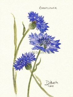 Blue Cornflower 1  Original Watercolor Painting by by JKDAUCH, $49.00