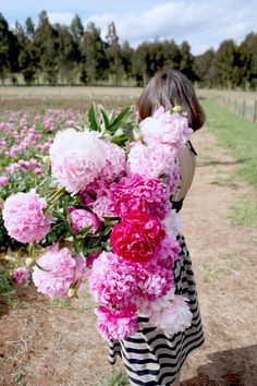 OMG Giant Peonies.  This photo is not photoshopped they are the real deal! I have to get some of those!