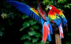 Dandy Macaw HD Wallpaper For Androud