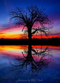 Here's a friendly lone tree at sunset