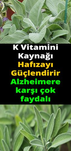 Natural Health Remedies, Happy Life, Health Fitness, Therapy, Herbs, Memories, Healthy, Nature, Plants
