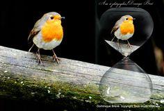Faudrait arrêter un jour de faire des comparaisons absurdes, avec le temps nous changeons... Laissez cette pauvrette vivre sa vie....... Facile de critiquer quand on ne connait pas sa vie ..... Mon ressenti, je n'attaque personne !!! Bonne journée bisous Bird, Animals, Live Your Life, D Day, Animales, Animaux, Birds, Animal, Animais
