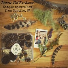 Nature Pal Exchange sample http://www.magicalmouseschoolhouse.com