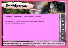 Customer Testimonial of EssentiallyPurrfect #mobile #MaineCoon #cat #catgrooming service. Rebecca #Manchester