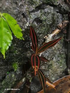The jungle of Borneo: Plants from a limestone valley