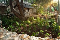 Every morning at the Dalmatian #EthnoVillage starts by taking a round in the garden and hand picking fresh vegetables and herbs, that will later guarantee an unrepeatable gastronomical experience for our guests' palate...