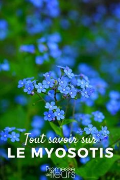 Earth, Forget-Me-Not, Flowers Mobile Wallpaper Banana Nutrition Facts, Nutrition Plate, Nutrition Month, Proper Nutrition, Nutrition Quotes, Wallpaper Earth, Flower Wallpaper, Foto Macro, Wallpapers For Mobile Phones