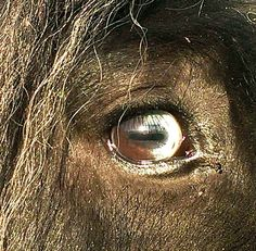 Trust can be seen in the eyes No One Loves Me, North America, Gypsy, Trust, Believe, Fire, Horses, Image, Horse