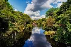 https://flic.kr/p/DCHTpR | The Waterway To Everest | Today's photo tour takes us to Disney's Animal Kingdom for a shot of Discovery River. What I like about this shot is the fact that you have Everest in the distance and you have the Tree of Life peaking out on the top right of the photo. Also, you have this very interesting sky with those puffy clouds that I like so much. I like how the river leads you right down to Everest which is the focal point of the photo. To top it all off, you have…