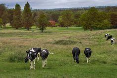 english countryside scene