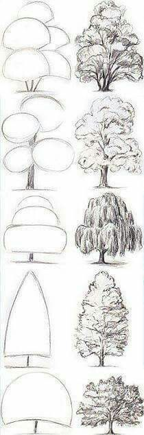 Drawing Tips Tree Drawing Tutorial. Start with basic geometric shapes. Drawing Techniques, Drawing Tips, Drawing Sketches, Painting & Drawing, Sketching Tips, Painting Trees, Basic Drawing, Learn Drawing, Drawing Drawing