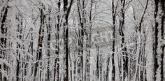 Panoramic view of tree trunks covered with snow in winter. via MuralsYourWay.com