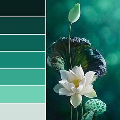 Created using Color Inspiration Tool For iOS jungle green - Real Time - Diet, Exercise, Fitness, Finance You for Healthy articles ideas Color Schemes Colour Palettes, Colour Pallette, Color Palate, Color Combos, Decoration Palette, Green Colors, Colours, Design Seeds, Colour Board