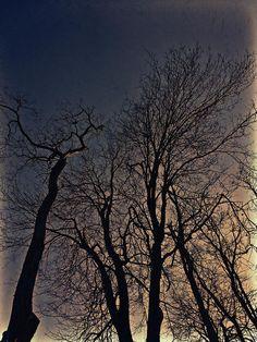 Barren Photograph