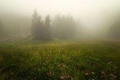 Radura nei pressi del Lago Santo | Tra le nebbie dell'Appennino Parmense by Michele Spagnolo
