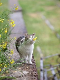 Smell The Flowers kitty cat - spring is around the corner! I Love Cats, Crazy Cats, Cute Cats, Funny Cats, Pretty Cats, Beautiful Cats, Animals Beautiful, Animals And Pets, Funny Animals