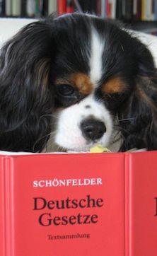 Sie suchen einen Anwalt für Tierrecht? Tierrechtsexperte Ackenheil http://www.tierrecht-anwalt.de