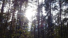 Good morning!   #sun #spring #photography #Jugla #mežs #nature