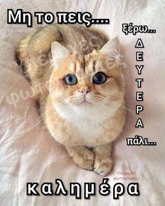 Good Morning, Places To Visit, Thankful, Cats, Animals, Mondays, Greek, Happy, Buen Dia