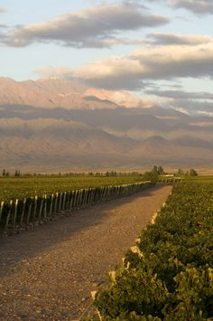 ARGENTINA | Mendoza: La capital del vino y sus bodegas | A capital do vinho e suas vinícolas - SkyscraperCity