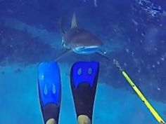 Diver fends off a sudden shark attack | GrindTV.com