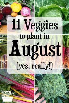 There are lots of vegetables you can plant in August! Even though it's hot outside, these twelve vegetables can handle the heat and will give you a tasty harvest this fall and winter. Includes recommended varieties, planting tips, and recipes. #Gardening #OrganicGardening #FallGarden #ForBeginners Vegetable Garden Tips, Planting Vegetables, Growing Vegetables, Growing Plants, Autumn Garden, Summer Garden, Organic Gardening, Gardening Tips, Growing Tomatoes In Containers