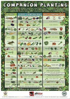 Companion planting chart.