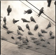 Birds on glass and wire. Via #colourandtension
