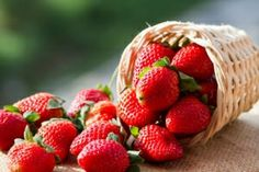 Aromatic red fruits rich in vitamin C, folic and amino acids, lower cholesterol and reduce the risk of cancer and heart disease.It's time for strawberries, although this delicious fruit can … Strawberry Picking, Strawberry Topping, Strawberry Recipes, Strawberry Juice, Strawberry Fluff, Strawberry Breakfast, Strawberry Fields, Strawberry Health Benefits, State Foods