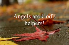 Angels: What You Should Know About Those Spiritual Beings Forget You Quotes, Love Quotes For Her, Top Movie Quotes, Top Quotes, World Hunger, Star Wars Celebration, Walk The Earth, Do It Anyway, My Face Book
