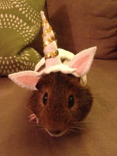 It's a guinea pig unicorn!
