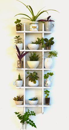 "Urban Jungle Blogger - ""My Plant Gang"" come espongo le mie mille piante!   Blog a Cavolo"