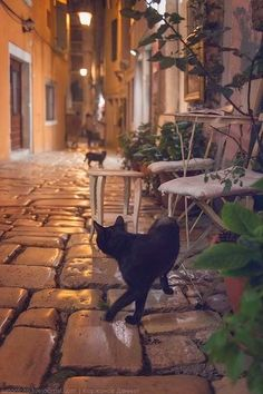 Dubrovnik at night and a black cat. For more cat pictures of Dubrovnik, go to http://travelling-cats.blogspot.be/2013/11/cat-from-dubrovnik-croatia.html