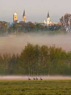 Discover the world through photos. Poland Cities, Visit Poland, Pictures To Paint, Warsaw, Capital City, Country Roads, Europe, Landscape, Beautiful