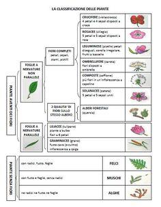 classificazione delle piante