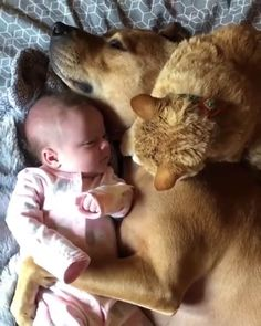 Cute Funny Animals, Cute Baby Animals, Funny Cute, Funny Dogs, Animals And Pets, Cute Cats, Super Funny, Cute Puppy Videos, Cute Animal Videos