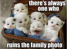 Theres Always One Who Ruins The Photo funny memes animals cats jokes story meme lol funny quote funny quotes funny sayings joke hilarious humor stories animal memes funny jokes cat memes