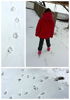 Learn who's visiting your neighborhood -- free printable animal track guides included for quick science fun!