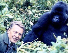 David Attenborough with Rwandan gorilla Natural History, Natural World, Richard Attenborough, Champions Of The World, Mountain Gorilla, People Of Interest, Prehistoric Creatures, Star Wars Episodes, King Kong