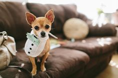 doggie wedding outfit