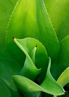 Shades of green #photography #nature #green