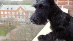 I know it's not a school, but I had two Scotties so I had to include it! Agnes Scott College Holiday e-Card 2012