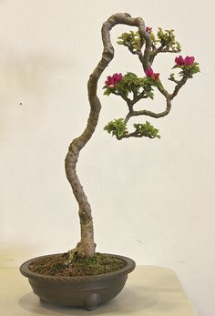 Beautiful Bonsai!!